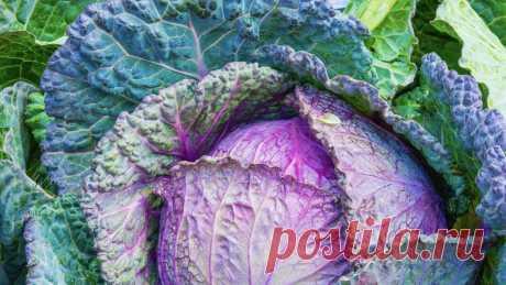 ВИДЕО о здоровье и питании;| ФАКТЫ О ПИТАНИИ - Майкл Грегер - nutritionfaсts.org на русском языке