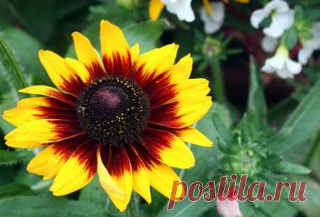 9 садовых цветов, которые можно вообще не поливать  Если у вас не получается часто бывать на загородном участке, стоит высаживать такие растения, которые смогут долгое время обходиться без вашего ухода. Особенно – без полива. Никогда не угадаешь, каки…