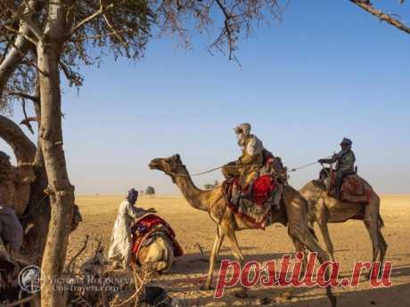 Кочевники Чада, Сахара. Автор фото – Виктория Роготнева: nat-geo.ru/community/user/118112/