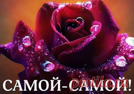 Очаровательная роза.