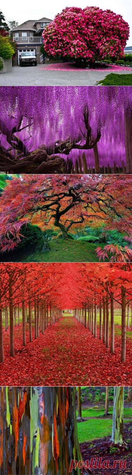 Деревья изумительной красоты - My izumrud