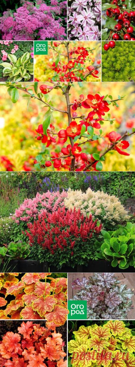 Ленивый сад: 20 многолетников для рационального садовода | Прочие многолетники (Огород.ru)