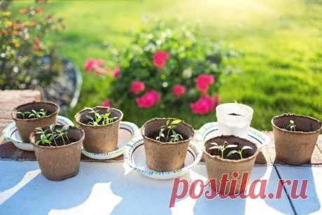 Стратификация семян: простые способы ~ Planetalsad