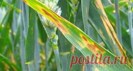 Грибковые заболевания комнатных растений, лечение