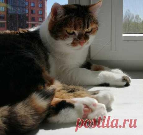 Все кошки – большие лежебоки, а наша Милана – больше всех | О кошках и не только | Яндекс Дзен