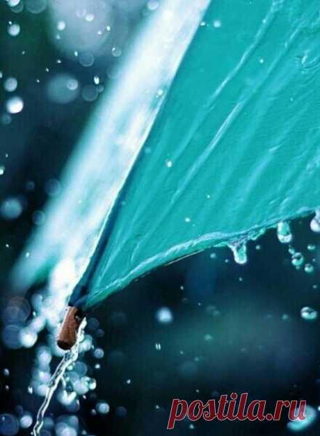 Люблю дождь — он приносит с собой запах неба.