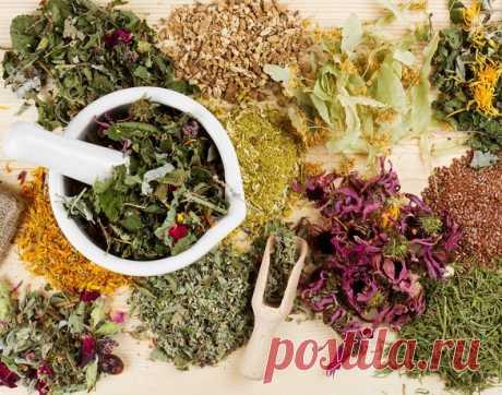 Лучшие травы от варикоза для разжижения крови при варикозе вен