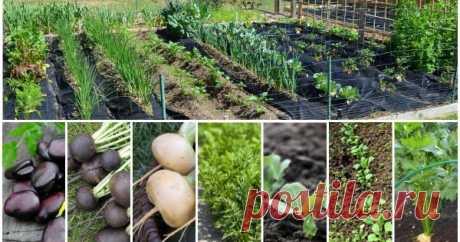 Что можно посеять и посадить в огороде в апреле Как только оттает и подсохнет почва, в огороде можно разбивать грядки и приступать к посадке овощей или зелени. Мы расскажем, что посеять в апреле в открытый грунт, чтобы в новом сезоне насладиться богатым урожаем.
