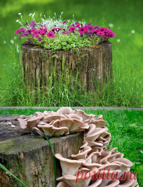 5 идей как приспособить старый пень для дела и не тратить силы на его выкорчевывание | посуДАЧИм об огороде | Яндекс Дзен