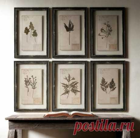 Долговечный гербарий для декора стен