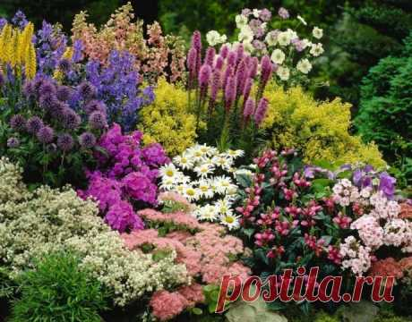 Многолетники: цветущая клумба с весны до осени
