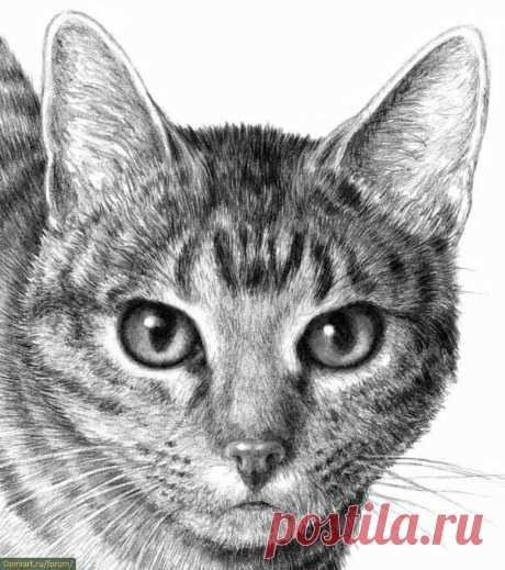 Рисуем кота карандашом — Сделай сам, идеи для творчества - DIY Ideas
