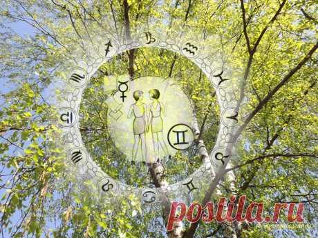 Гороскоп на период с 30 марта по 3 мая 2020 по неделям для Близнецов | Астропропаганда | Яндекс Дзен ♊✨ Автор: астролог Нина Стрелкова. ✧ Очень многое, в том числе и уверенность в себе, в это время зависит от внешней поддержки, от наличия хороших друзей, а также от жизненных случайностей, контролировать которые вы не можете. Меркурий, управитель вашего знака, до 11 апреля будет в знаке Рыб, затем он перейдет в знак Овна до 27 апреля...
