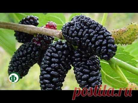 Чудо рослина для жінок: балансує гормони, знижує вагу, позбавляє від діабету, закрепів, остеопорозу і не тільки! – Час для себе
