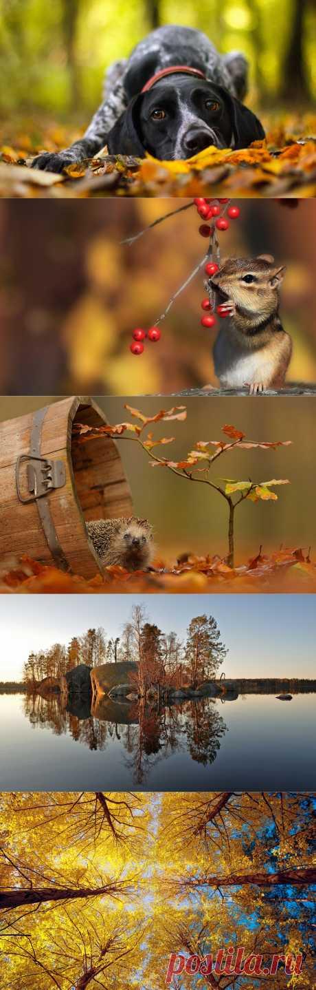 Удивительные осенние пейзажи! - ЖУРНАЛ СО ВКУСОМ