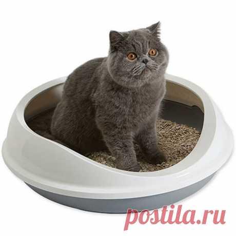 Устраняем запах кошачей мочи - Лайфхак