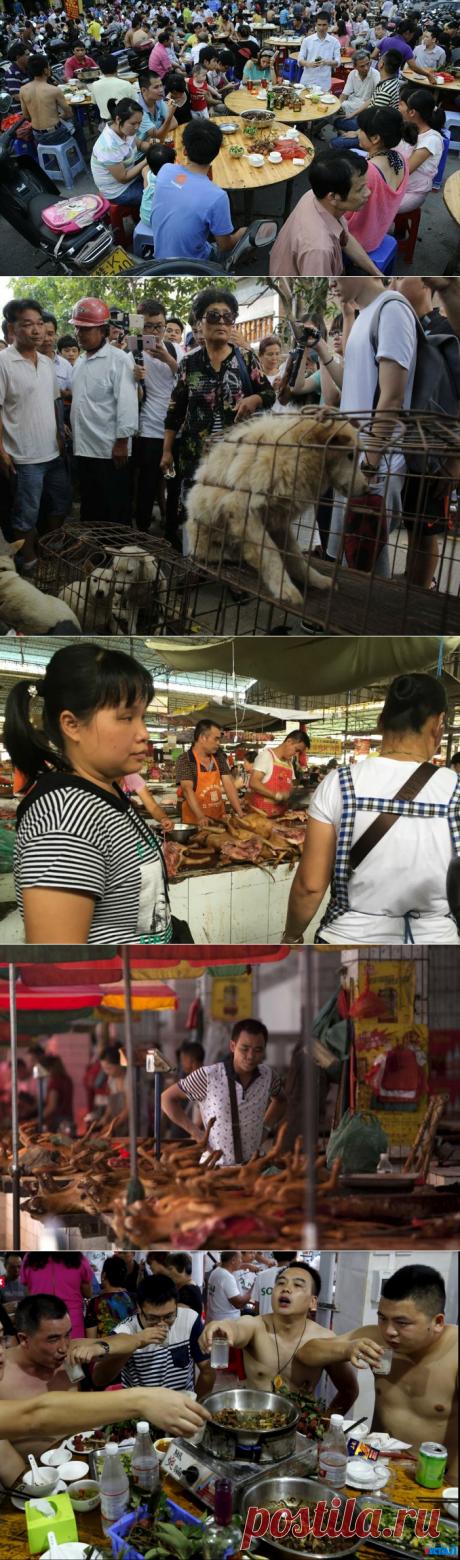 Фестиваль еды в китайской провинции Гуанси. Лучше бы я его не посещала | PetZona.Ru | Яндекс Дзен