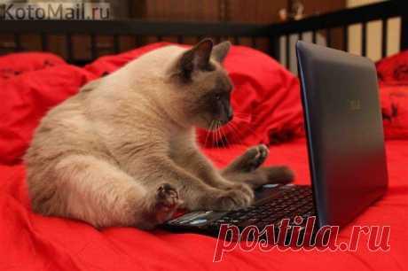 В интернете никто не знает, что ты кот