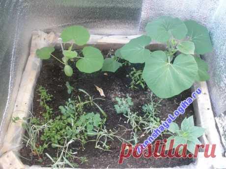 La Lógica femenina — Hortalizas y la verdura en el balcón