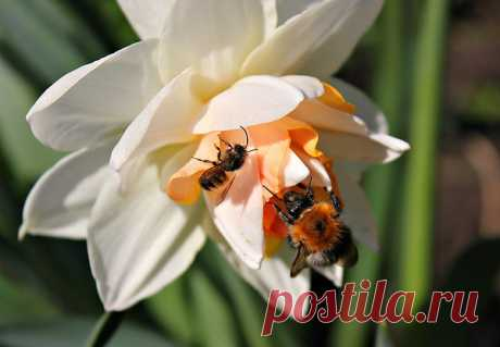 Весна и её труженики))