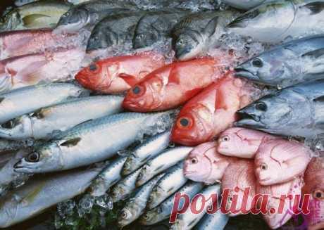 Какая рыба самая полезная?