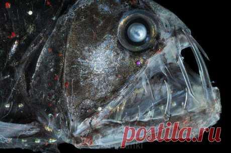 Чудища из морских глубин
