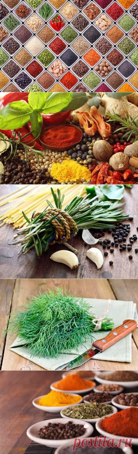 Специи на кухне: что и чем заменить