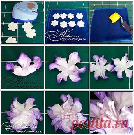 Цветок гартензия