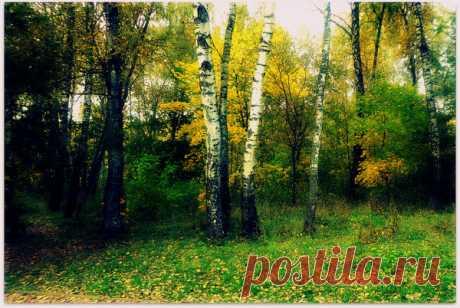 Любимые песни наших времён. Десятая серия. Осень. – МУЗЫКА 70-Х , пользователь Сергей Теснов ©  Спасибо!
