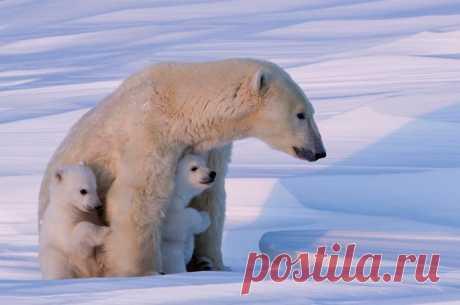 Мамочка с детишками