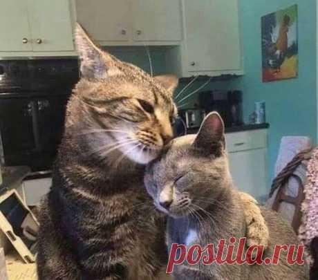 Смешные и милые коты. Фото пушистых в разных ситуациях #17 | Котомания | Яндекс Дзен