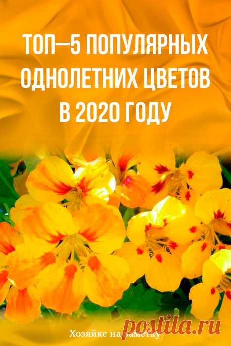 Топ–5 популярных однолетних цветов в 2020 году