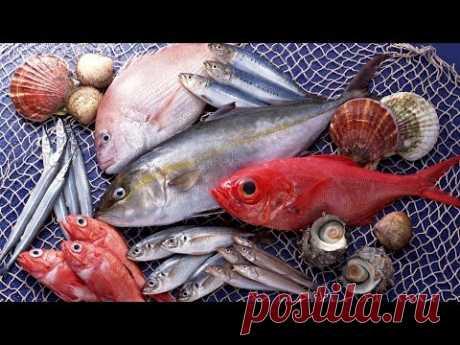 Самая полезная рыба для человека  топ 10