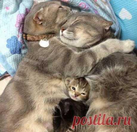 Счастье - это когда все дома, и все спят.