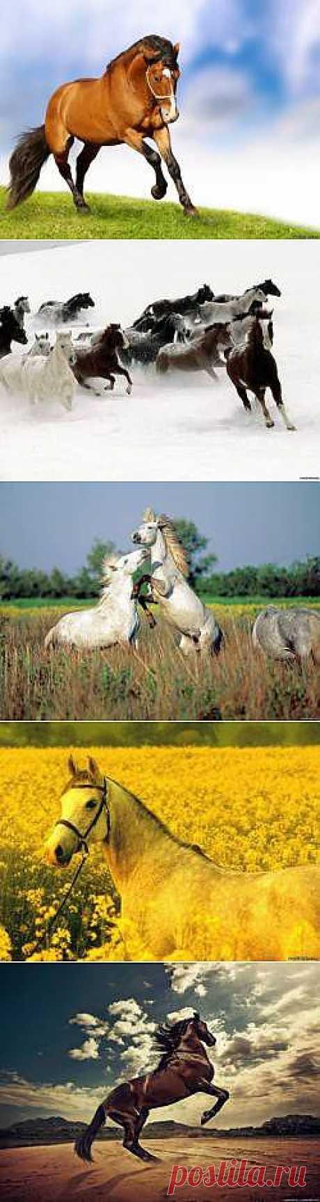 Красивые Картинки год лошади 2014 - 174 фото обои на рабочий стол галерея 1 - Фото мир природы
