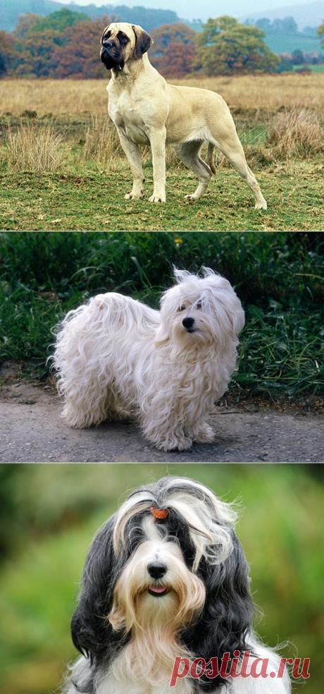 11 идеальных для квартиры пород собак   PetTips