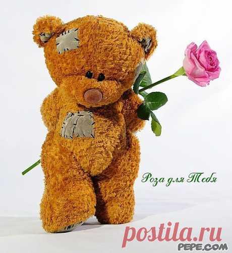 Роза для Тебя - PEPE.com
