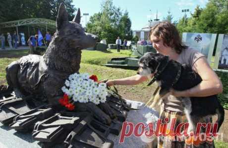 Los perros de la guerra. - es visible en la raíz