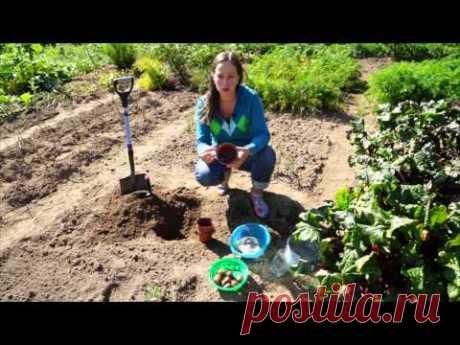 3 интересных способа посадки тюльпанов - YouTube