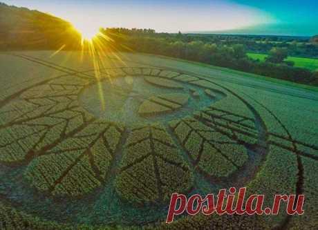 На английском поле появился круг с поразительным рисунком