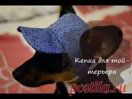 Летняя кепка для собаки своими руками (той-терьер)