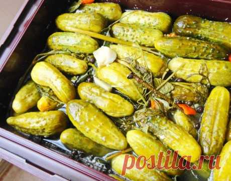 Pickles for the winter without vinegar