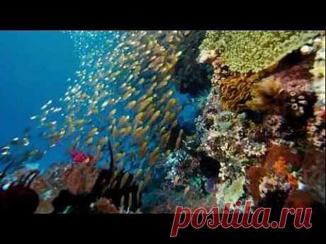 Подводный мир красота красок  HD - YouTube