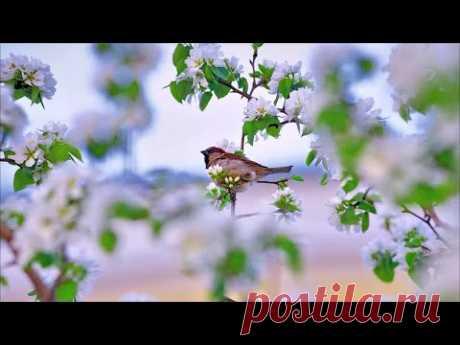 Майское утро 💢 Стихи Лидии Тагановой под очаровательную музыку