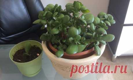 Какие цветы можно и нужно держать у себя дома: фото и названия растений