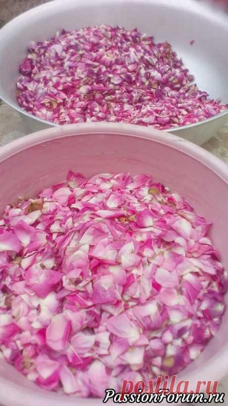 Розовые лепестки - подарок природы