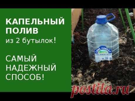 Капельный полив. Лучший способ из пластиковых бутылок. - YouTube