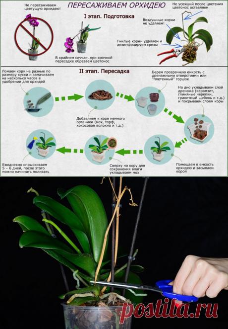 Отцвела Орхидея: что делать со стрелкой