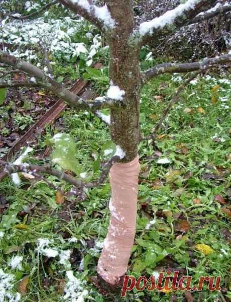 Чем покрыть деревья осенью: 3 варианта, которые эффективнее традиционных побелки и краски - Огород, сад, балкон - медиаплатформа МирТесен