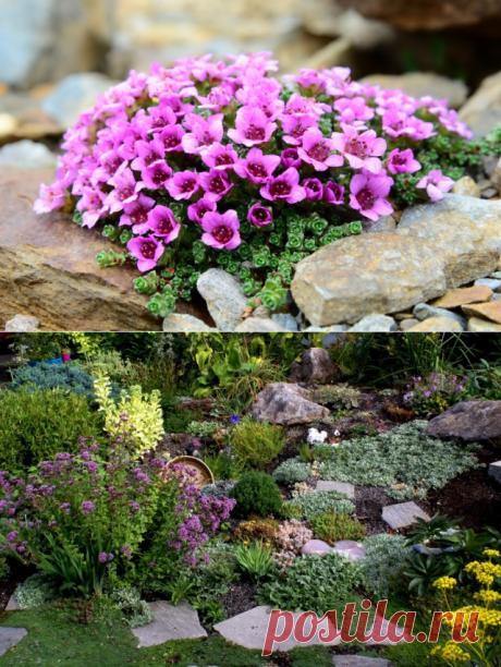 7 лучших почвопокровных растений для альпинария. Список почвопокровников с фото - Ботаничка.ru
